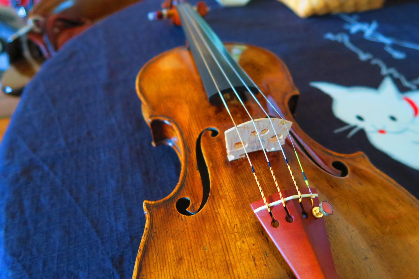絃楽器MASARU
